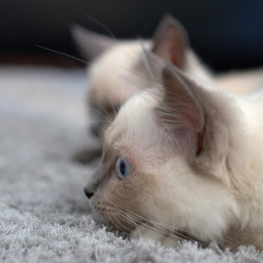 Bild von zwei Katzen